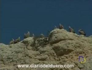 Aves en Montejo