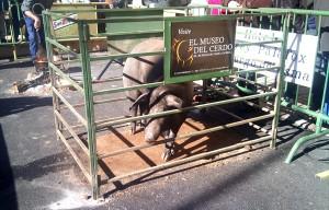 matanza virrey palafox 2011 (5)